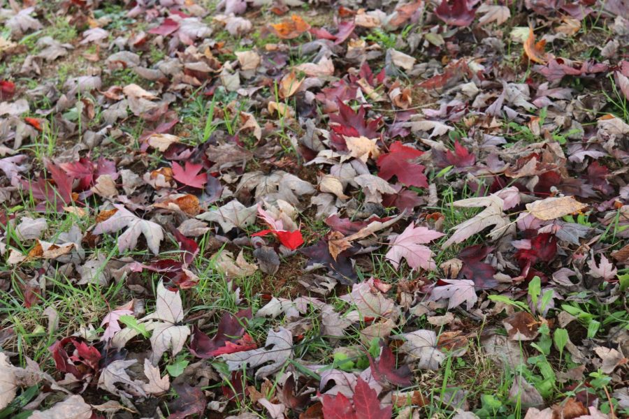 Its Time To Leaf Summer Behind!